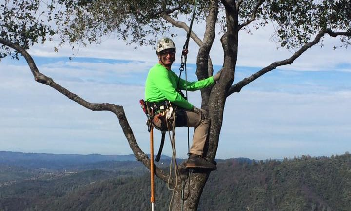 photo of aero acton ISA certified arborist climbing a tree