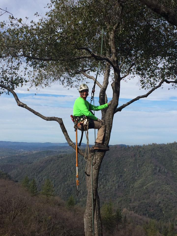 ISA certified arborist aero acton at the top of a tree